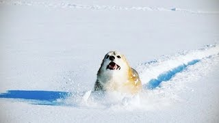 DOGS IN SNOW ★ Dogs Discover SNOW (New Video) (HD) [Funny Pets]