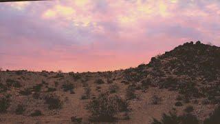 Neiman Marcus X Billie Bodega - Last Consignment