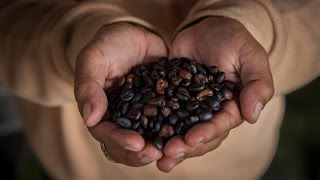 Does Drinking More Coffee Lower Your Risk of Liver Cirrhosis? Maybe. - Newsy