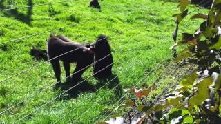 Monkey Sex XXX width=