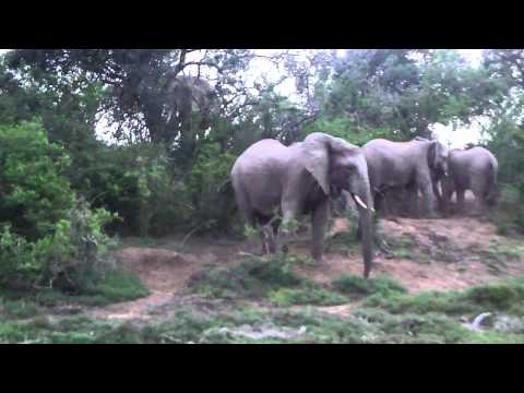 Sibuya Game Reserve South Africa Elephants gamedrive.MP4