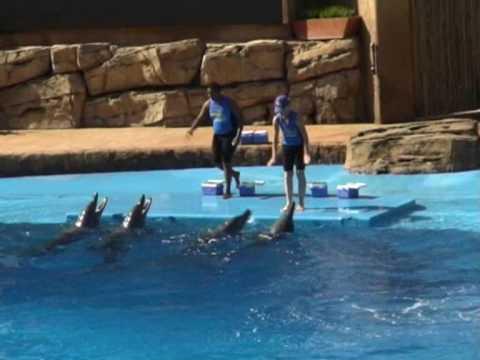 Delfiny w oceanarium w Durbanie 2/5