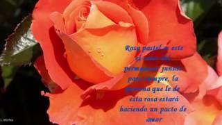 El lenguaje de las rosas...