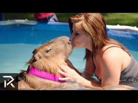 Relatii ciudate intre oameni si animale