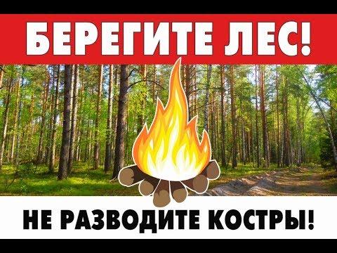 Берегите лес! Не разводите костры!