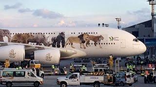 A380: O MAIOR AVIÃO DE PASSAGEIROS DO MUNDO POUSANDO NO AEROPORTO DE GUARULHOS