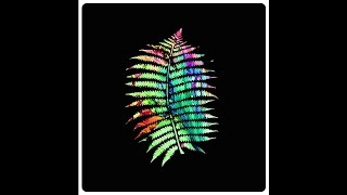 """The Psychic Ferns """"Knew New"""""""
