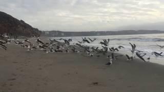 Playa Luna Nudista vuelo de gaviotas