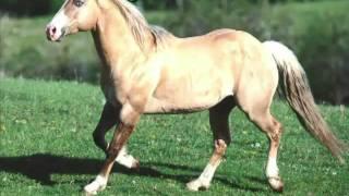 Mercês da Cunha Rego - Cavalo Ruço