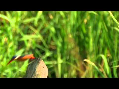 3-Birds of the South Luangwa Valley Africa.wmv