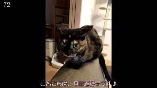 平田志穂子の全力78% 第11回2016/06/06