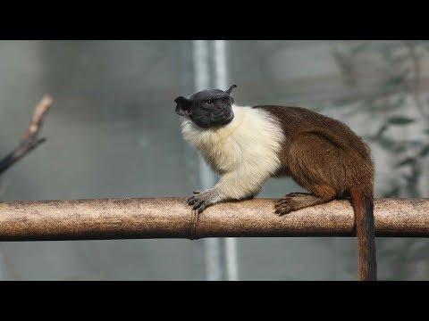 動物都有尾巴,你知道動物的尾巴有什麽作用嗎? - YouTube
