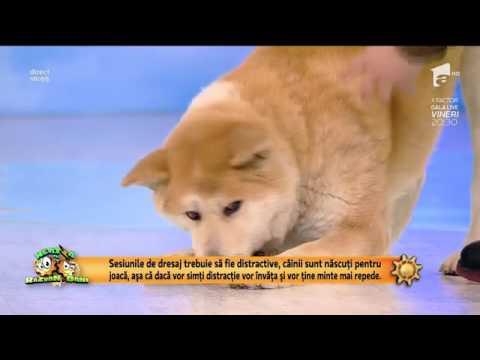Reabilitarea câinilor cu tulburări de comportament