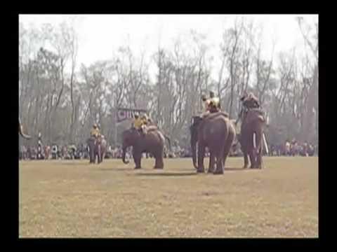 Elephant Polo Championships Nepal 2008
