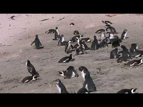 South Africa – July 2010_0002.wmv