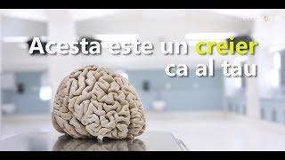 Stiai asta despre creierul tau?