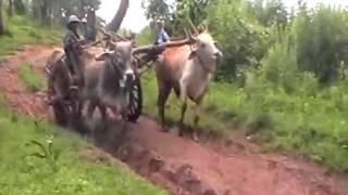 Myanmar - rural live