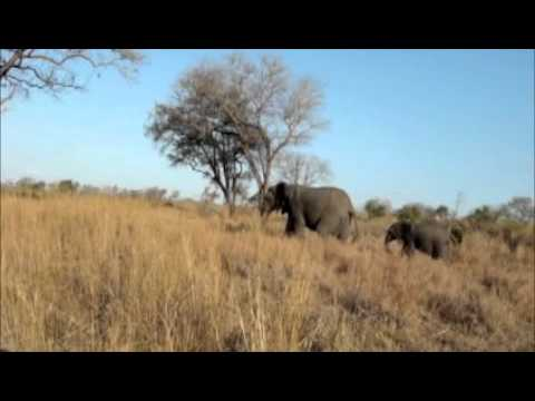 African Safari – Parade of Elephants