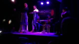 Cardamomo Flamenco Show in Madrid, Spain