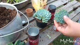 Vamos reciclar e proteger o meio ambiente..fazendo lindos vasos de suculentas ♥