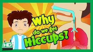 Why Do We Get Hiccups ? Hiccup Causes