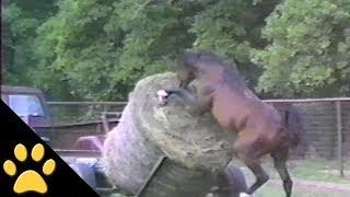 VIDEO. Si caii fac lucruri trasnite