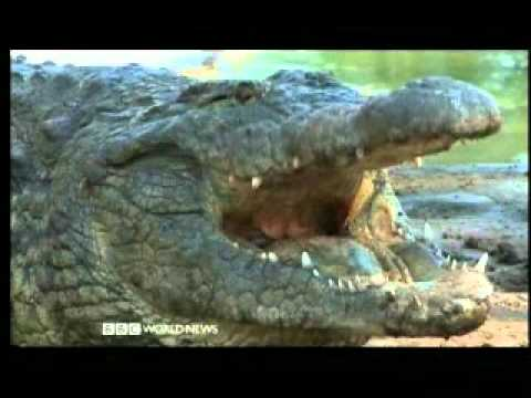 My Country South Africa 1 of 4 – Forest of Crocodiles – BBC Culture Documentary