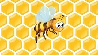 Arı Vız Vız Vız Şarkısı - AfacanTV