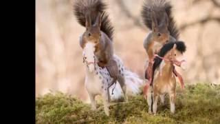movie of nature photographer Geert Weggen
