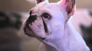 3 O Bulling - Eu Tenho Um Cão de Estimação - 2ª Temporada