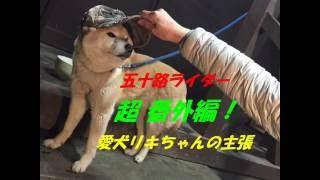 五十路ライダー 超番外編! 愛犬リキちゃんの主張