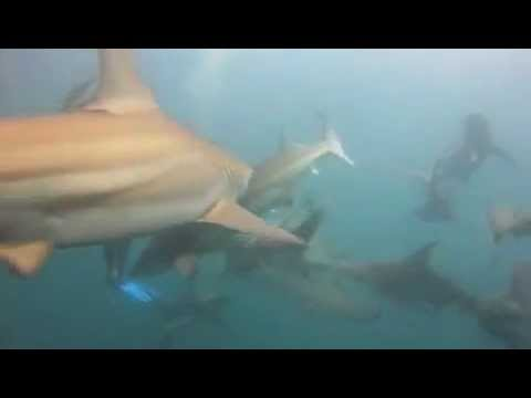 Nomads Tours South Africa Aliwal Shoal