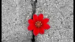 Avett Brothers Famous Flower of Manhattan