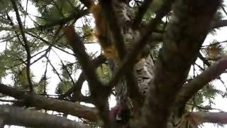 Crazy Curious Squirrel