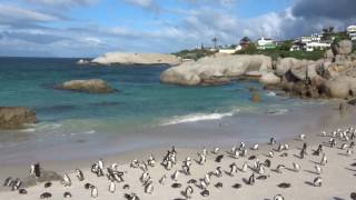 Pinguins of Africa