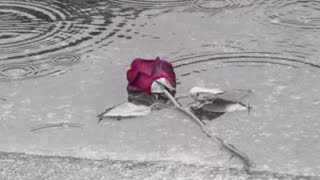 Cat Stevens - The wind