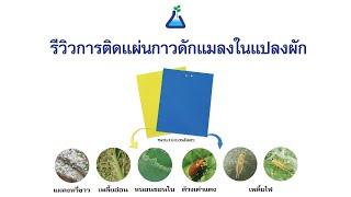 TAB_Innovation EP3: รีวิวการติดแผ่นกาวดักแมลงในแปลงผักกลางแจ้ง