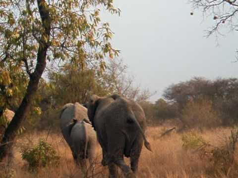 South Africa 2005 – Wild Elephants