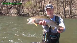 Big Fish, Fat Fish Landing a Bigun on a 2wt Syndicate Rod