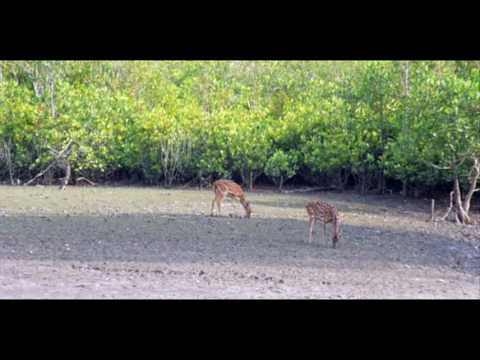 Bangladesh Sundarbans Explorer Package Holidays Dhaka Bangladesh Travel Guide