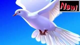 ✝НОВИТЕ ХРИСТИЯНСКИ НАБОЖНИ ПЕСНИ ✝NEW CHRISTIAN Devotional Songs