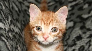Meet Marmalade!