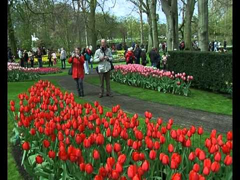 Holland-Keukenhof. Made in Ukraine.