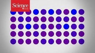 Are these dots purple or blue? Your answer might not be as reliable as you think