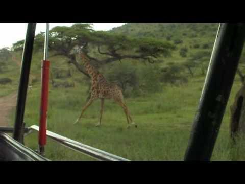 The Stunning Wildlife of Africa