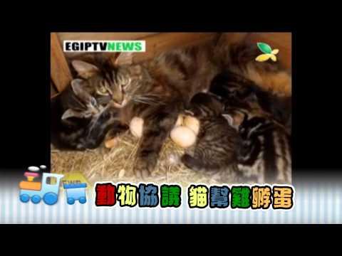 臺南市仁愛國小有品運動第3集(合作1) - YouTube