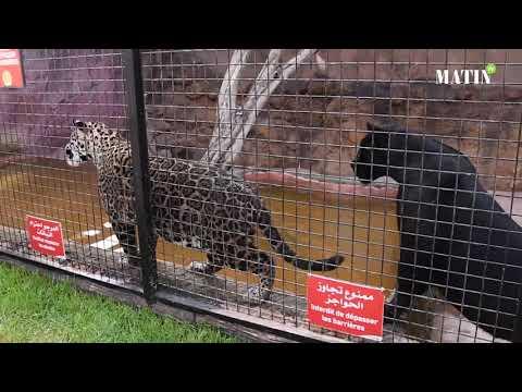 """Video : Visite au cœur du parc zoologique """"Dream Village"""""""