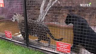 """Visite au cœur du parc zoologique """"Dream Village"""""""