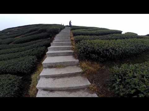 空中散步~南投八卦茶園 - YouTube