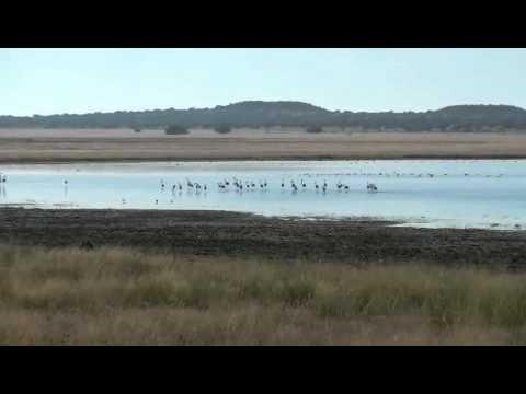 Flamingo on pan.m4v